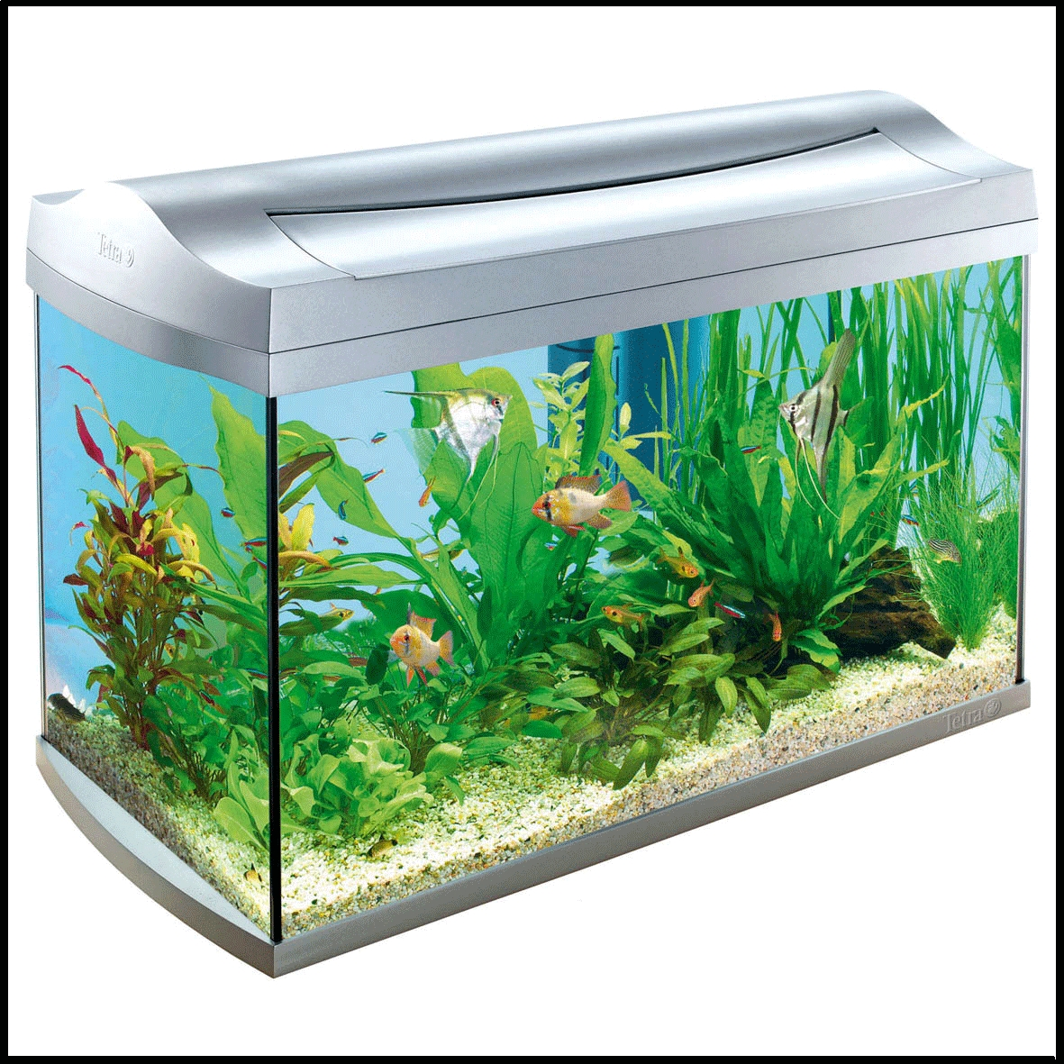 Tetra Aqua Art 60l Tropical